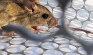 hantavirus case in china
